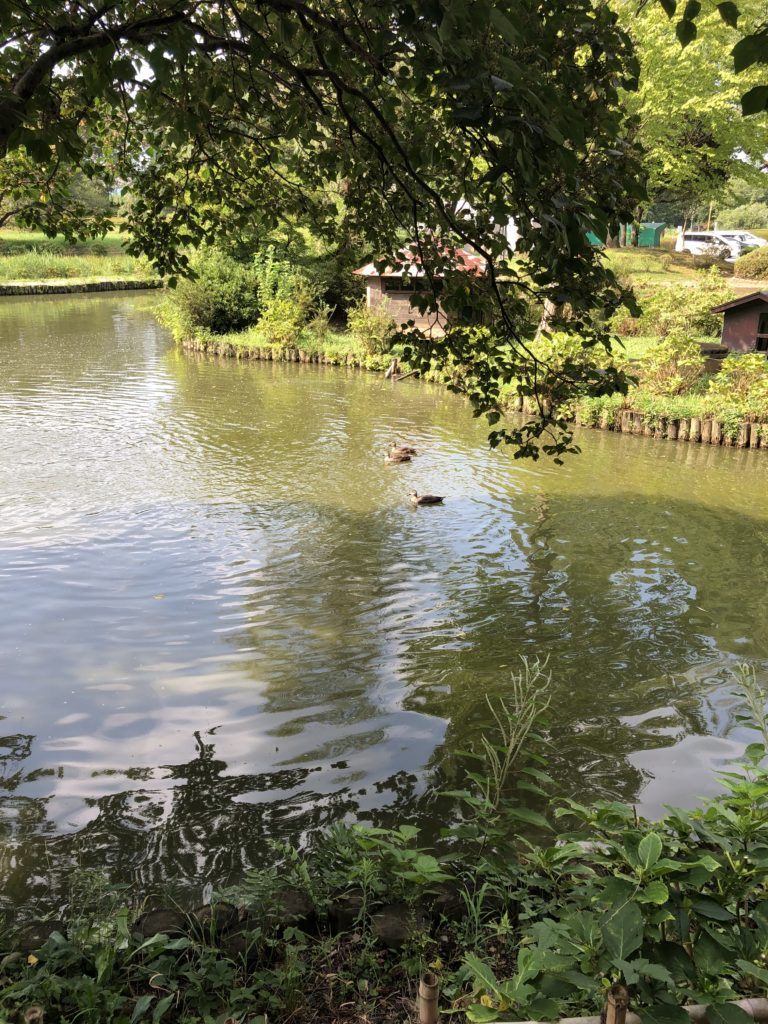 アヒル池画像